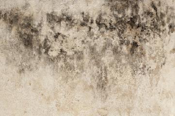 Black spot mould
